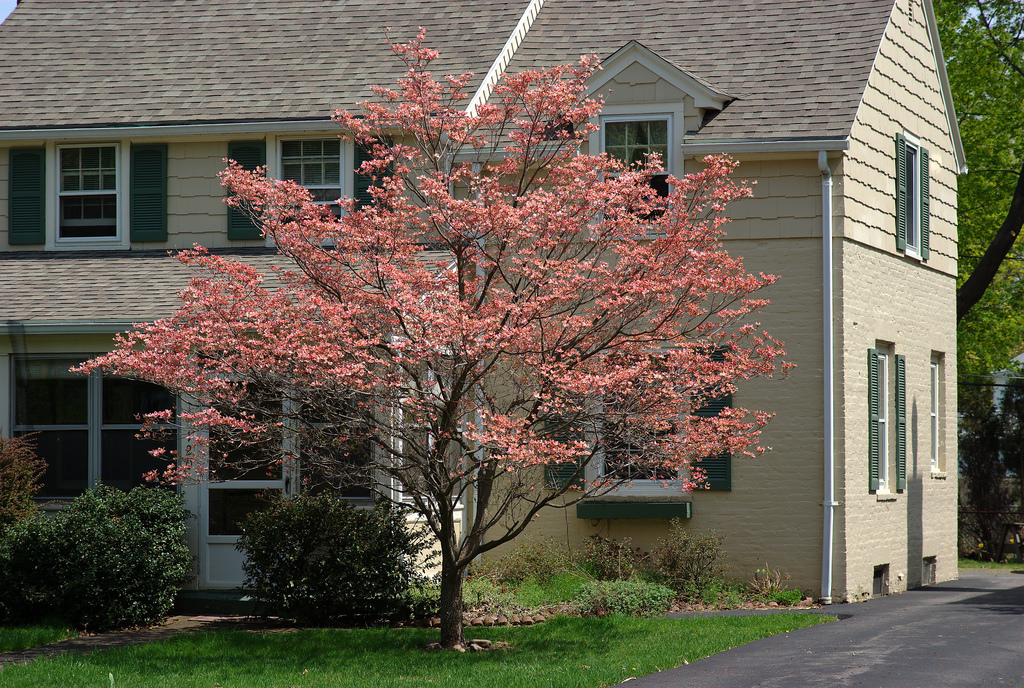 blooming tree